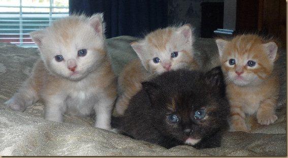 4 kitties