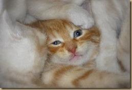 1 kitty