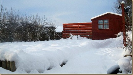 Part of the back garden covered in snow
