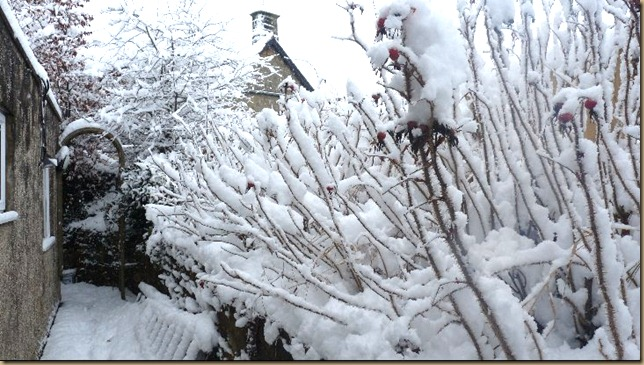 Our back garden - January 1 2010