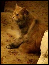 coal-covered cat