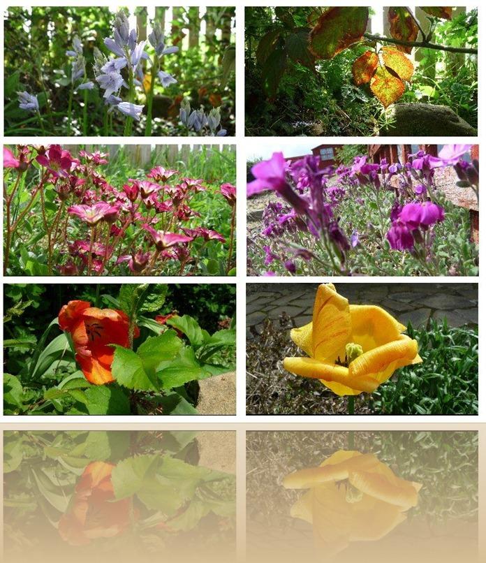 Scargill's Garden