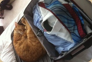 my cat who wanted to join the trip