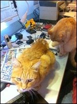 Simba (front) and Ollie (rear) on my workbench