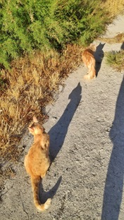 Taking Simba and Ruffy for a walk this evening
